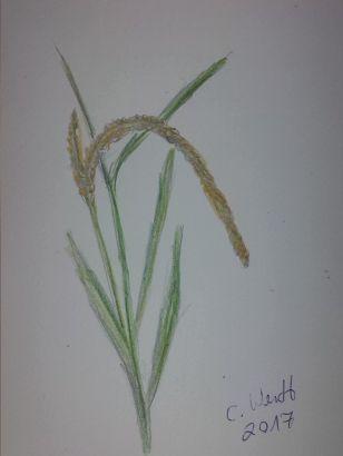 Reispflanze (Bloggröße)